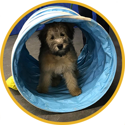 Dog in a tunnel